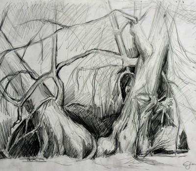Bäume im Park Gotha